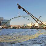 Catamaran Wien
